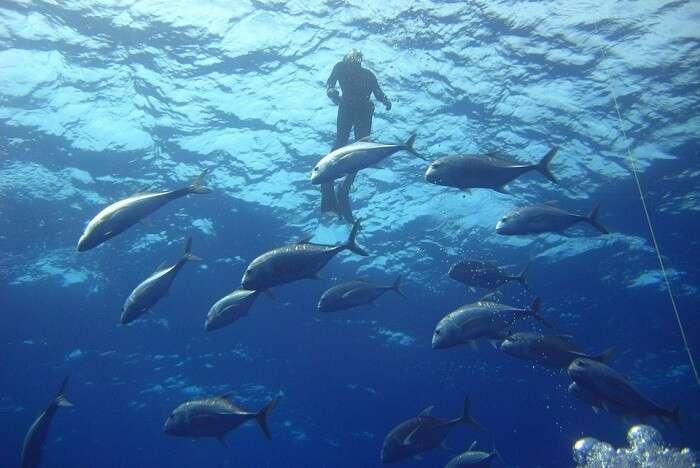 Diving Fish Sea Diver Ocean Water Light Swimming