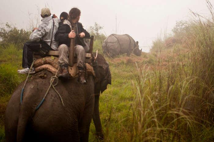 Chitwan National Park Elephant Safari, Nepal