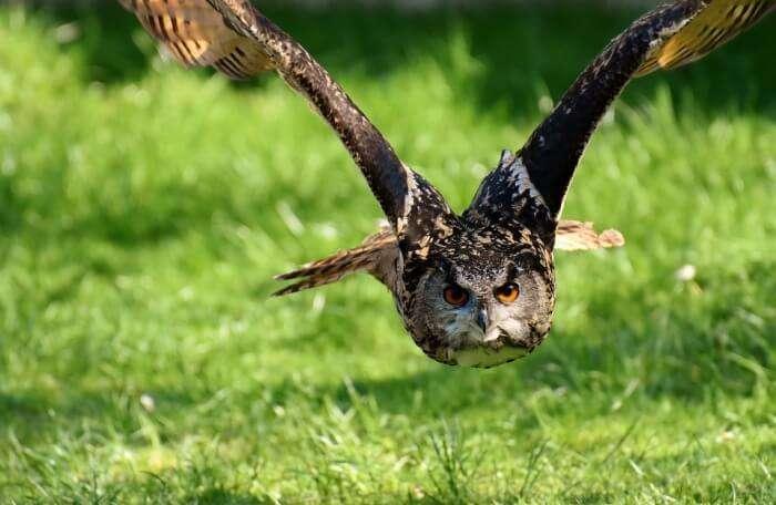 Explore the Highland Wildlife Park