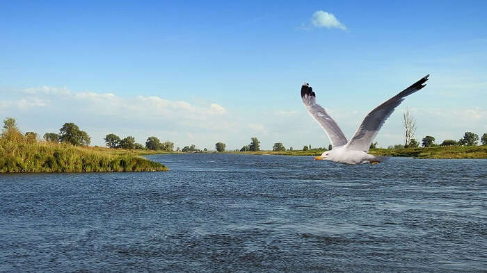 Gull Fly Landscape Bird Flies on River