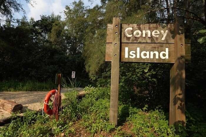 Flora and fauna Coney island