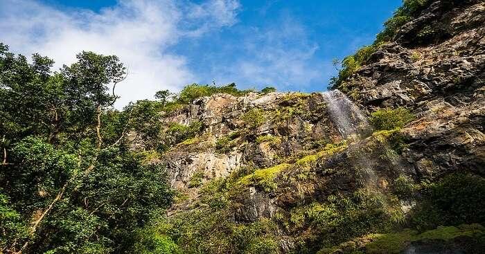 Gorges in Black River Gorges National Park