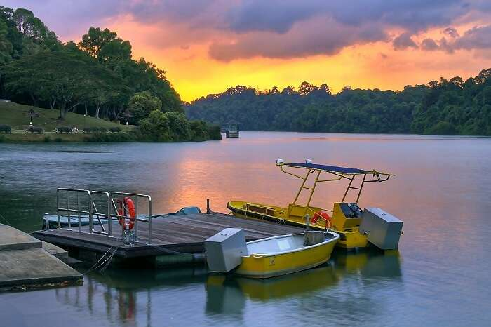 sunsest at Macritchie reservoir