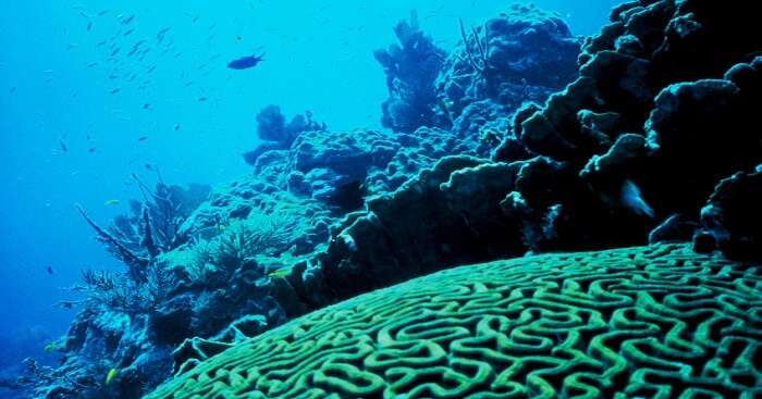 coral dome at mirissa diving site