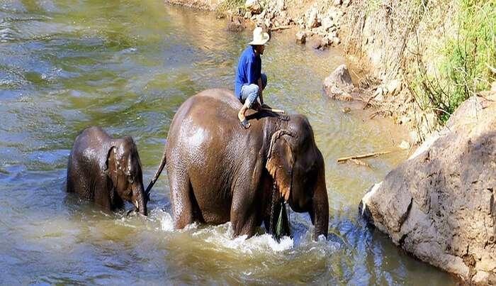 Elephant ride view