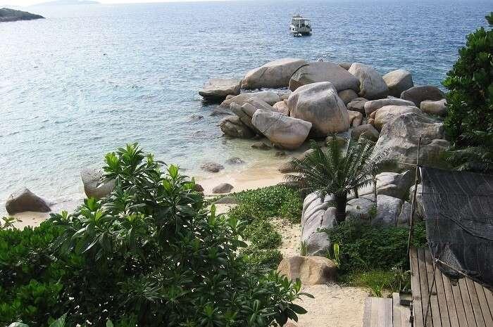 Plants at Pulau Tengah
