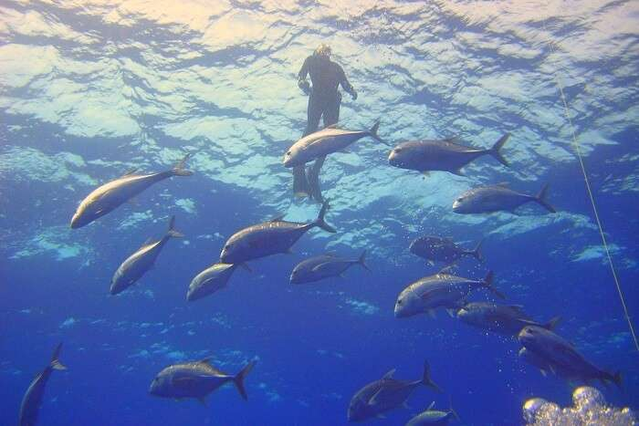 Amazing Diving Fish Sea Diver Ocean Water Light Swimming