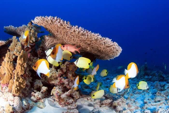 Reef And Marine Fish in maldives
