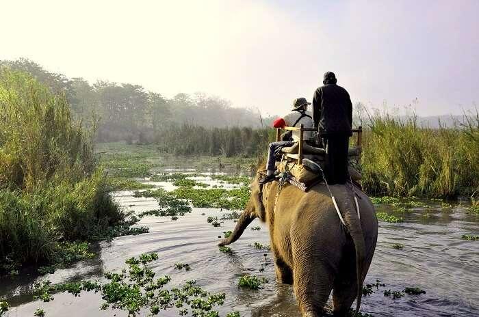Safari In Nepal Cover