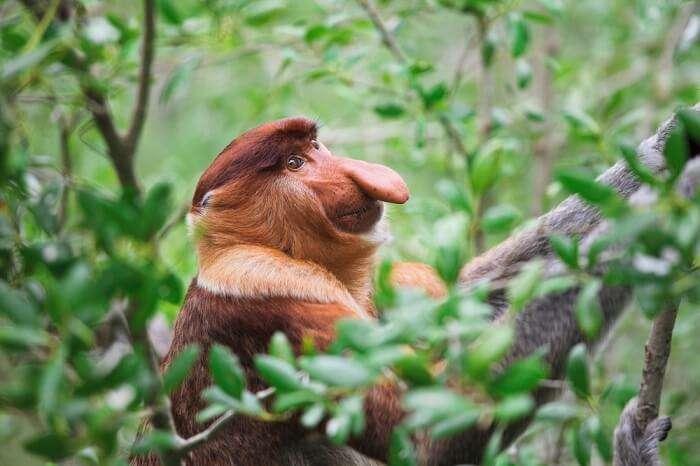 Sarawak Bako National Park