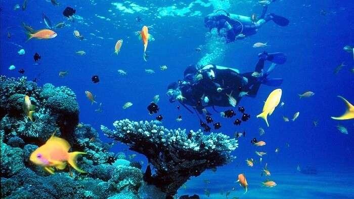 Snorkeling In Pasikudah