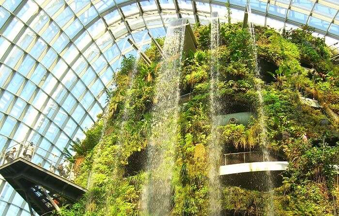 Cloud Forest Gardens