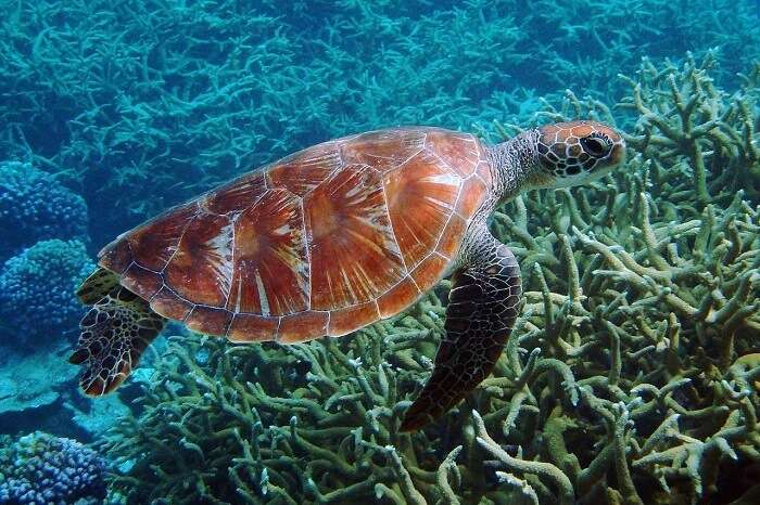 A Guide Of Turtle Island National Park For All Travelers