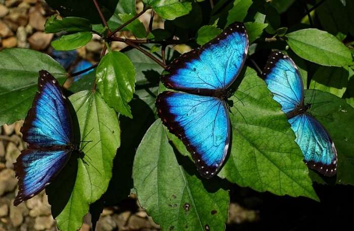 Visit The Butterfly Farm