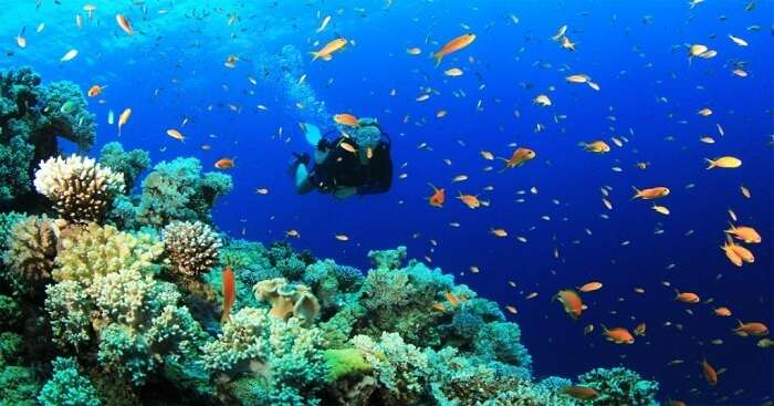 man diving in ocean water