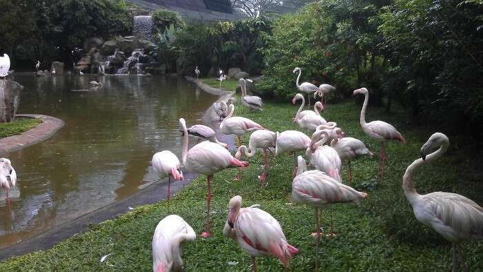 birds in Kuala Lumpur