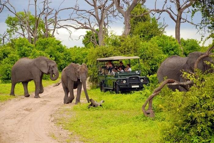 jeep and elephant