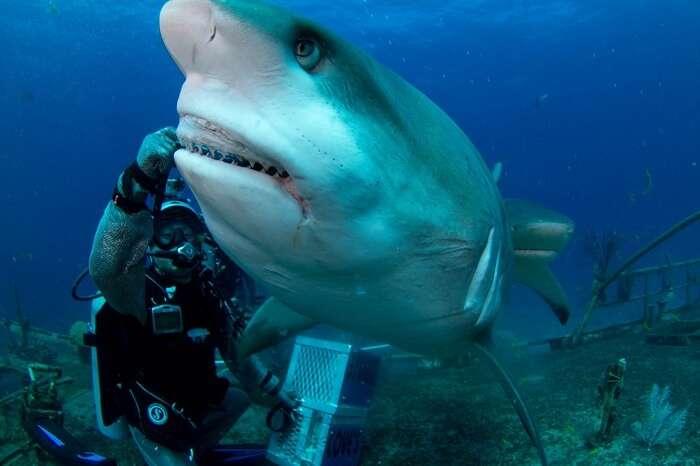 Experience shark feeding encounter