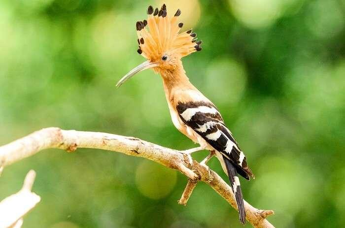 Thailand Bird