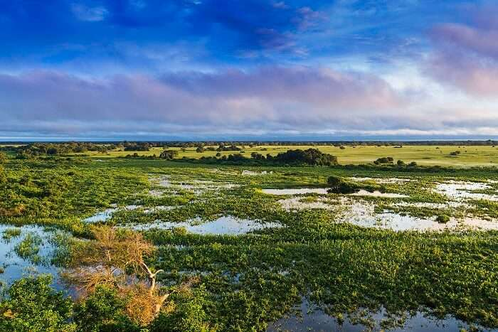 the biggest wetland on the planet