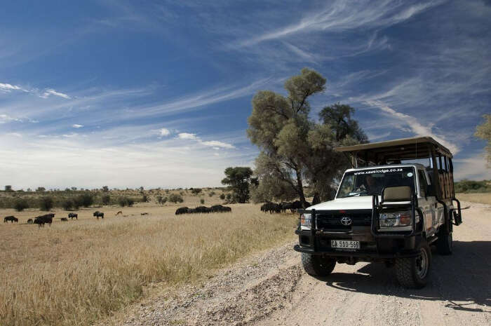 About Kgalagadi Transfrontier Park