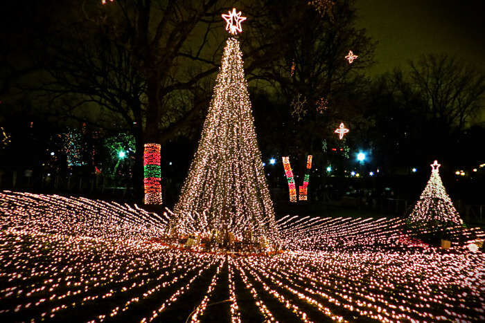 Attend Dallas Zoo Lights festival