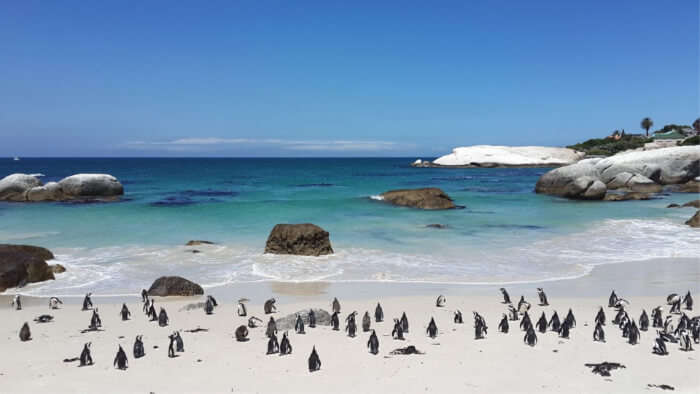 Best Time To Visit Boulders Beach