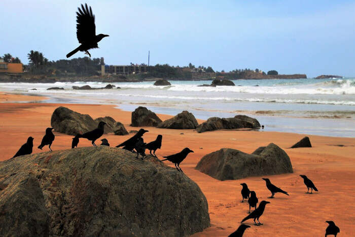 A group of crows sitting on the beach