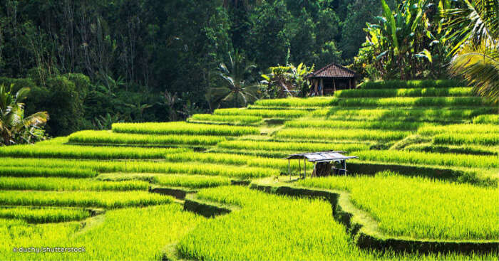 Day Trip From Bali