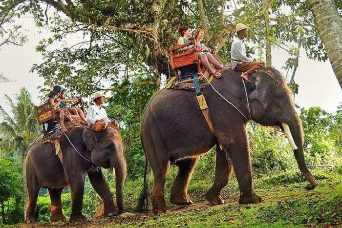 Amazing Elephant Ride