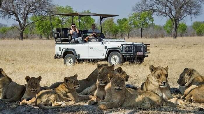 Garden Safari
