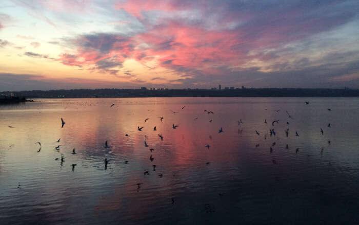 الطيور تحلق فوق البحيرة