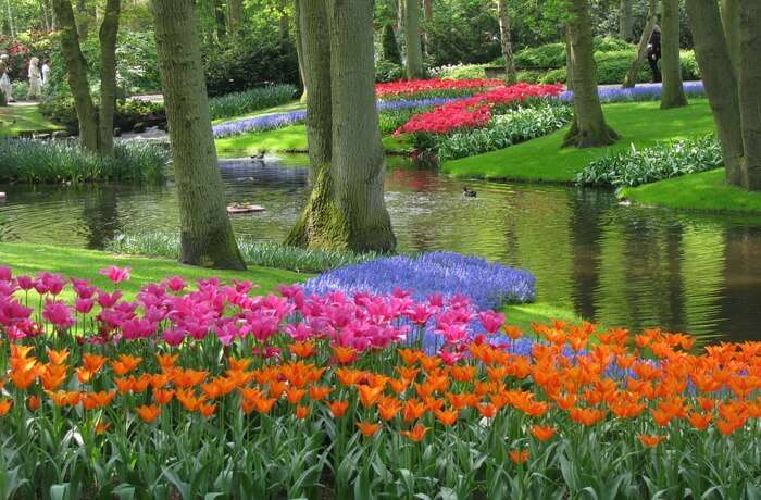 Beautiful garden of flowers