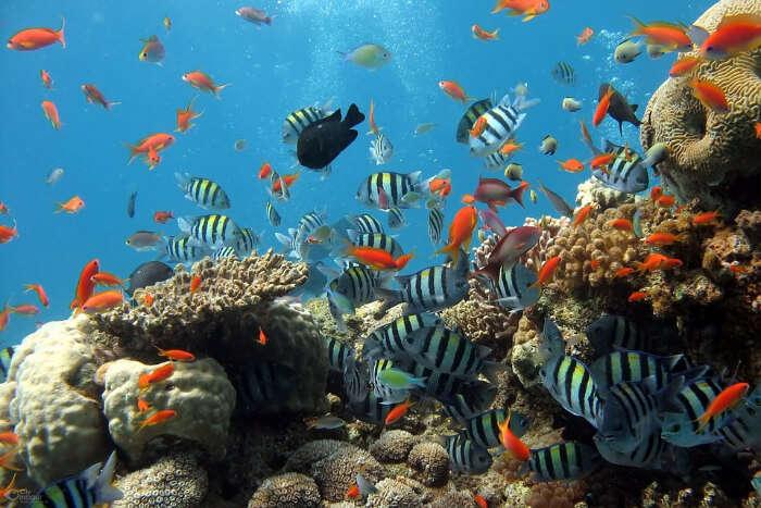 marine life pondicherry