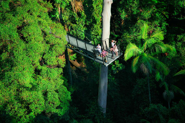 Mount Tamborine Rainforest Skywalk