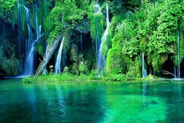 natural attraction spread