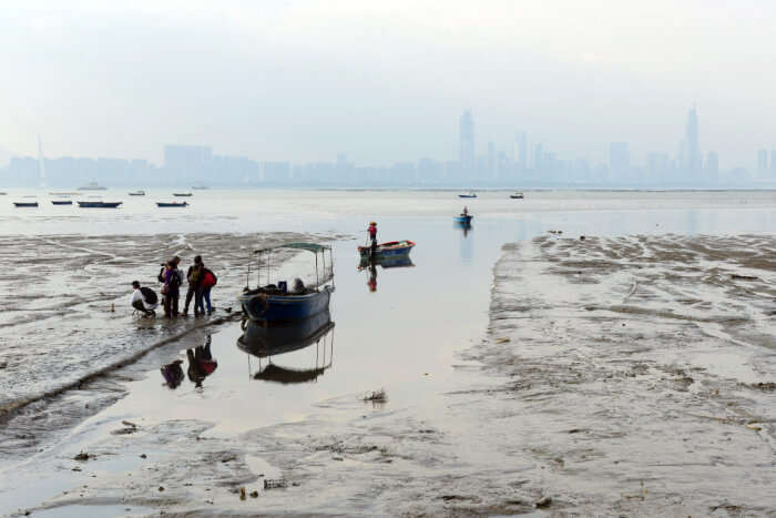 See The Mud Flats Of Deep Bay