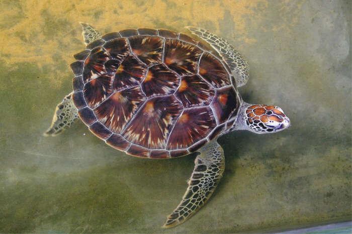 Turtle Hatchery in Unawatuna