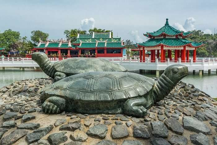 Tortoise population at Kusu Island