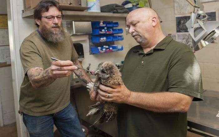 Man holding the injured Bird
