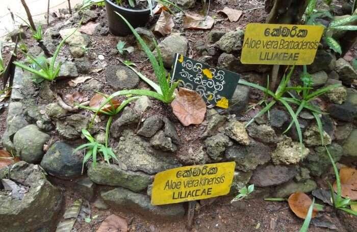 Arunalu Spice Garden