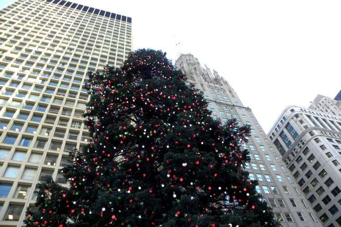 City of Chicago Christmas Tree