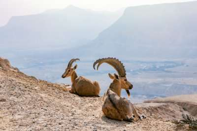 Wildlife In Egypt