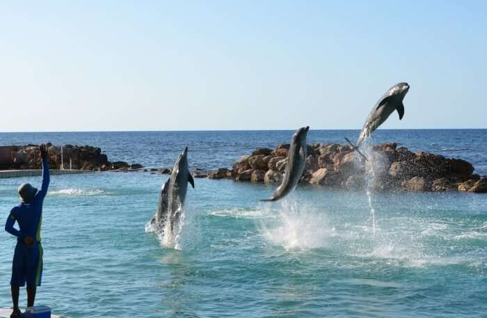 Dolphin Splashing from water