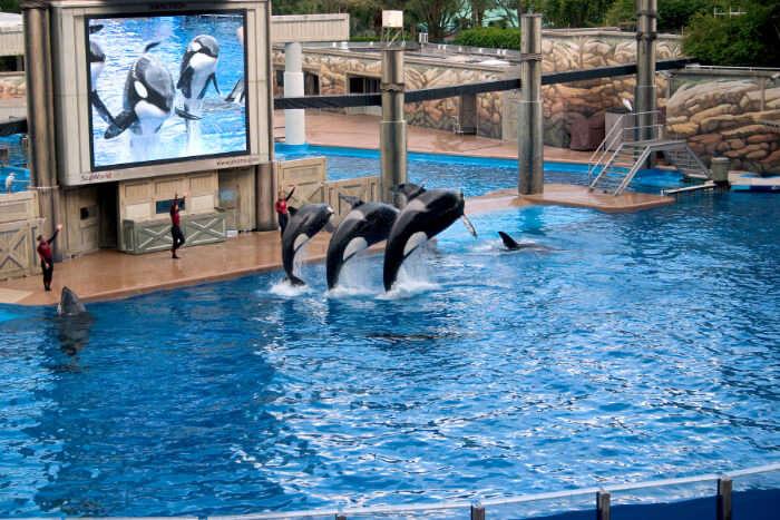 Dubai Dolphinarium in Dubai