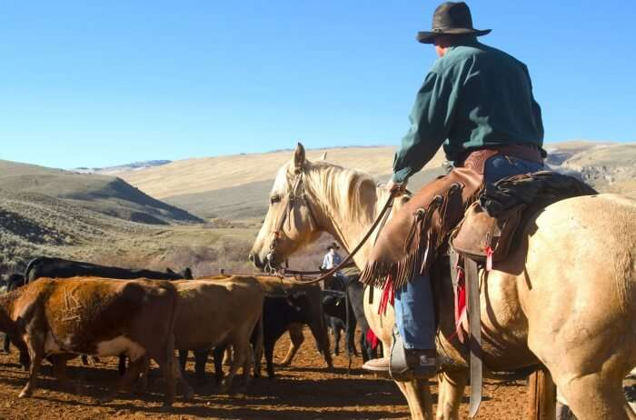 Experience The Ancient Cowboy Tradition