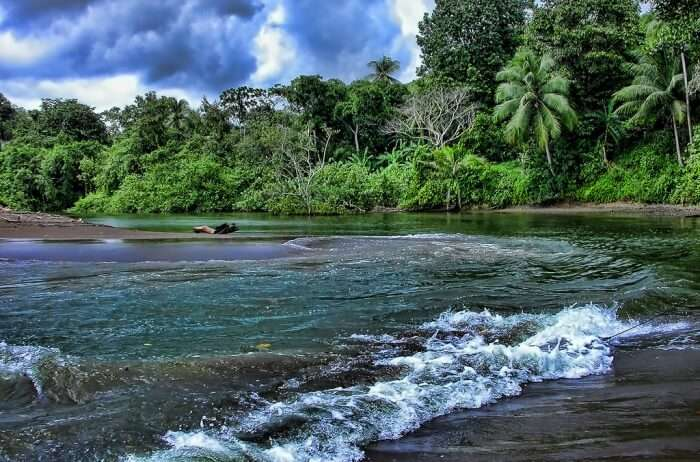 Explore The Lush Green Environment Of Costa Rica