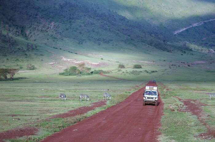 Go on an authentic African safari in the Ngorongoro Crater Highlands