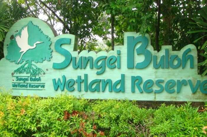 How To Reach Sungei Buloh Wetland Reserve