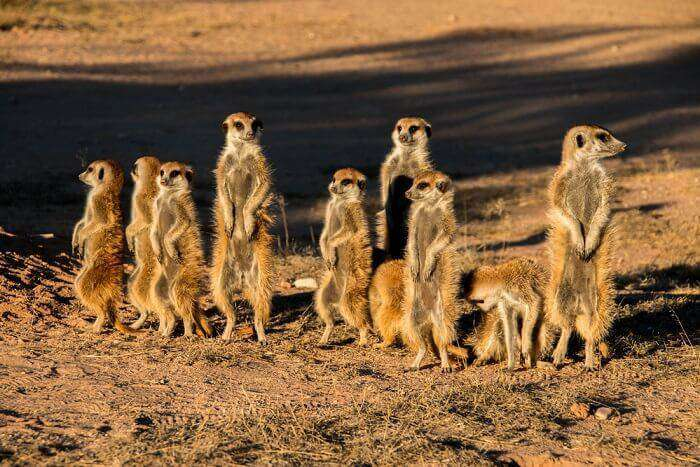 Kgalagadi-Transfrontier-Park_19th oct